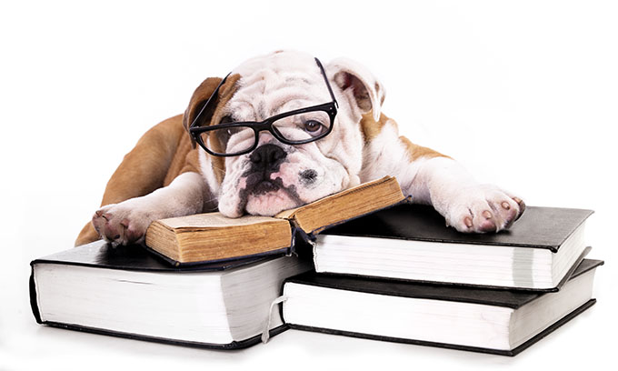 Dog Laying on Books